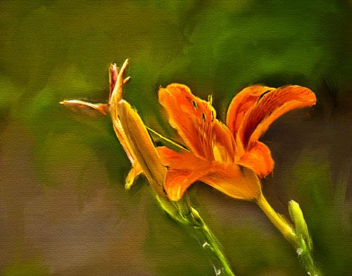 flower01_1